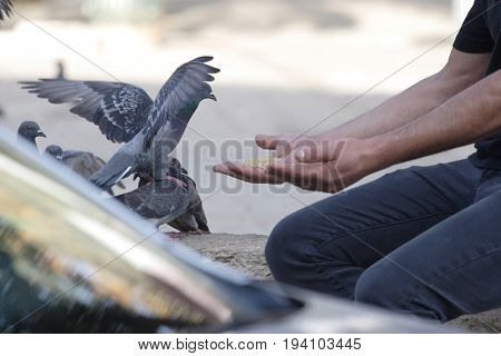 Man feeds pigeons in the town square