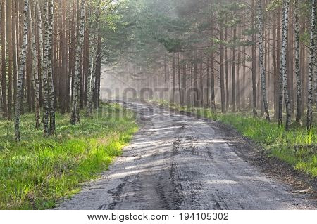 The photo shows a forest, unpaved road. It leads through a young pine forest. There are many birches on the edge of the forest. It is summer, the trees are green leaves. A cloud of dust is lifted up by a passing vehicle. It is sunny day.