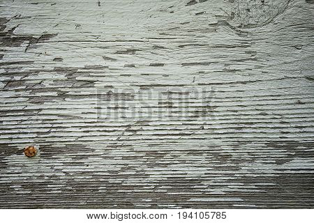 peeling paint and rusty nail on grungy rustic wood