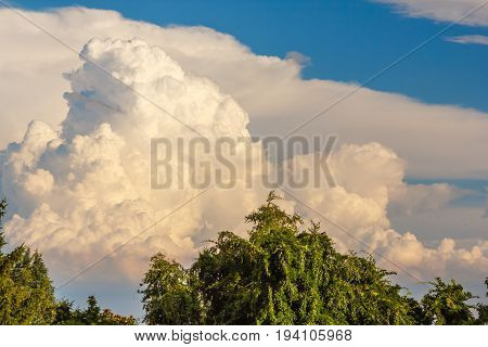 clouds shaped of trees create a similarity with green trees /a landscape of trees of white clouds and real green trees