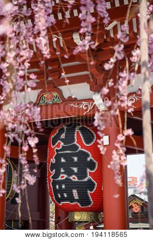 Giant red lantern at Senso-ji Temple during cherry blossom season in Asakusa District popular travel destination of Tokyo Japan. Japanese text translation is