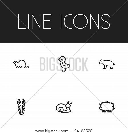 Set Of 6 Editable Zoology Icons. Includes Symbols Such As Crayfish, Escargot, Beaver And More. Can Be Used For Web, Mobile, UI And Infographic Design.