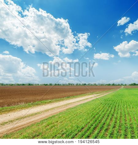 spring fields and blue cloudy sky