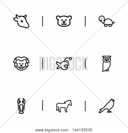 Set Of 9 Editable Zoology Icons. Includes Symbols Such As Lion, Steed, Tortoise And More. Can Be Used For Web, Mobile, UI And Infographic Design.
