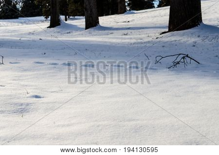Landscape covered in winter snow in Virginia with footsteps