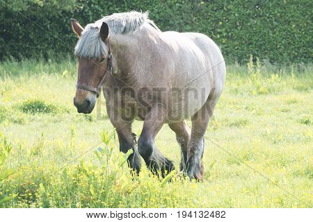 Grey-Brown horse in the open grass field near water