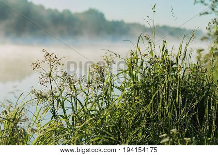 Coastal wild grass, quiet early morning on the lake, dawn. Sunbeams through the fog. Concept of seasons, environment, natural beauty, summer hobbies, leisure, vacation