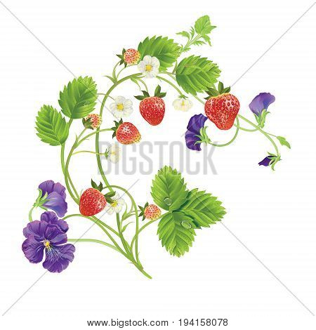 Vector strawberry and heartsease. Design for tea, natural cosmetics, beauty store, pastry filled with strawberry, dessert menu, , perfume, aromatherapy. With place for text