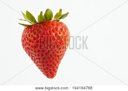 Strawberry (Fragaria ananassa) isolated on white background