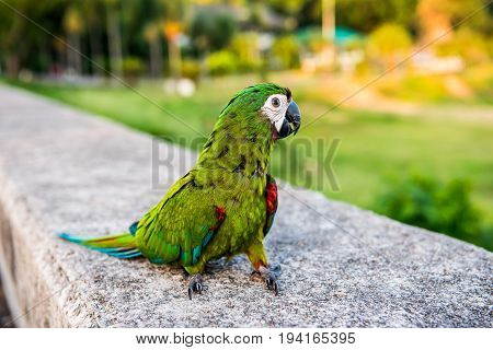 Parrot lovely bird animal and pet at naturalpark