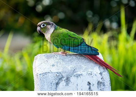 Parrot, lovely bird animal and pet in the garden