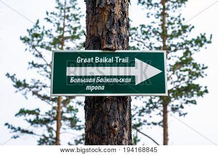Great Baikal trail sign on a pine tree. The Great Baikal trail is laid around Lake Baikal