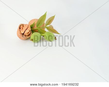 Walnut and walnut kernel on the white background.