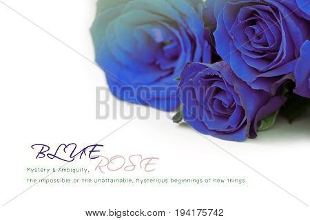 Blue roses bouquet with sample text on white background