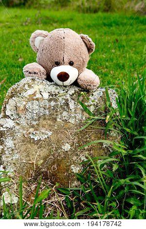Teddy Bear Playing Hide And Seek Behind Rock