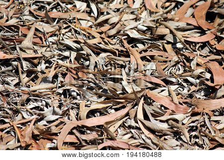 Bushland Leaves Background