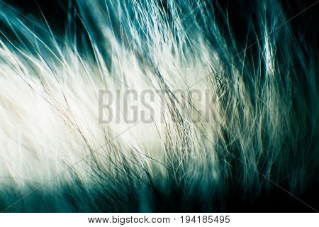 Abstract, Colorful Macro Of A Goat Fur. Shallow Depth Of Field, Artistic Colors, Decorative Look.