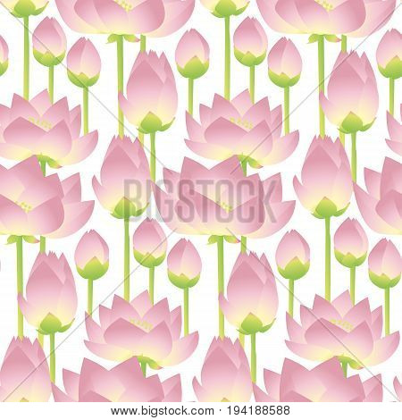 lotus lilies decorative floral element. vector illlustration