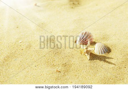 Seashells on the sand background. vacation concept