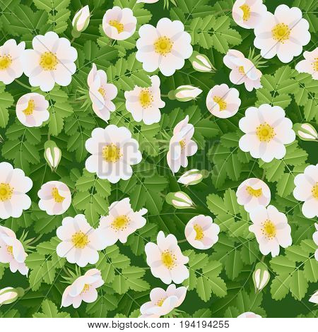 Dog-rose branch with flowers and leaves background. Seamless pattern. Wild rose vector illustration. Rose hips.