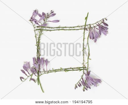 Holiday concept - floral frame with purple hosta flowers isolated on white background. Flat lay overhead view.