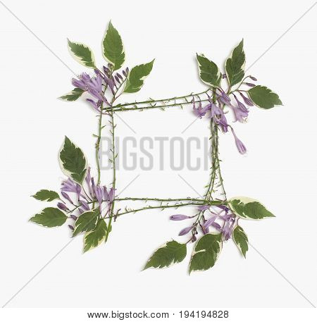 Floral frame made of purple hosta flowers and green leaves isolated on white background. Flat lay overhead view.