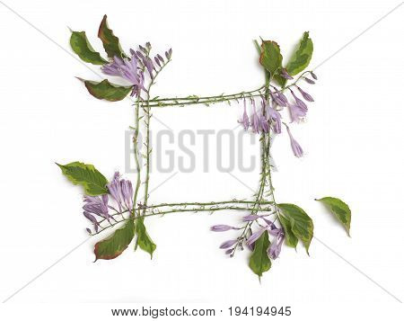 Floral frame with purple hosta flowers isolated on white background. Flat lay top view.