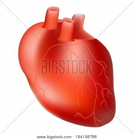 Human Heart. Internal Organ. Anatomy Concept Isolated On A White Background. Realistic Vector Illustration. Medicine.
