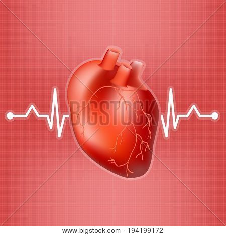 Human Heart And Heart Beat On Ekg Isolated On A Background. Realistic Vector Illustration. Medicine.