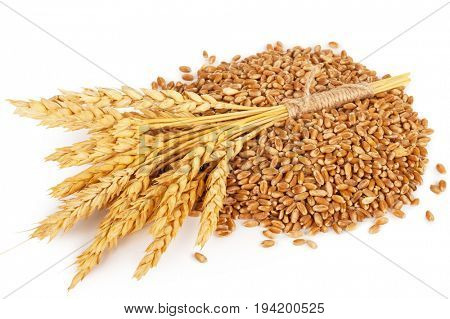Ears of wheat and wheat grains