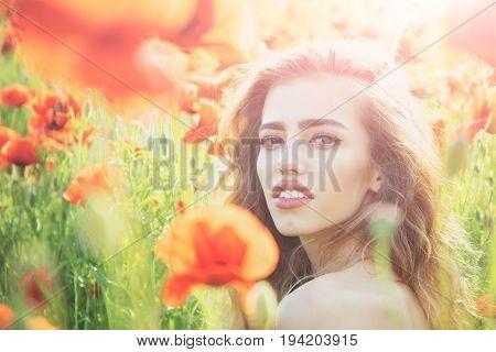 Pretty Woman Or Girl In Field Of Poppy Seed