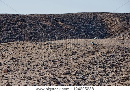 Desert Hills With Grey Sand Surface And Rocky Texture