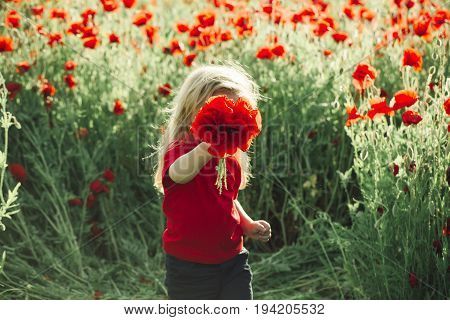 kid or smiling little boy with long blonde hair in red shirt in flower field of poppy with green stem on natural background summer spring childhood and happiness opium mothers day