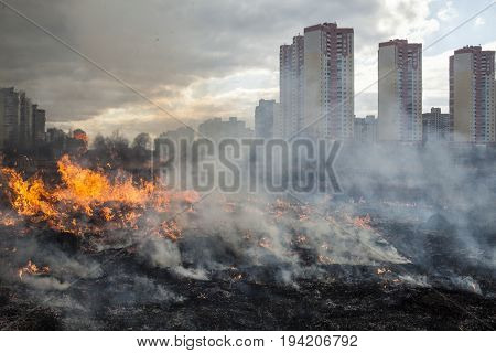 Fire in the field near the city (Kyiv Ukraine).