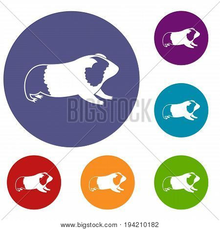 Hamster icons set in flat circle reb, blue and green color for web
