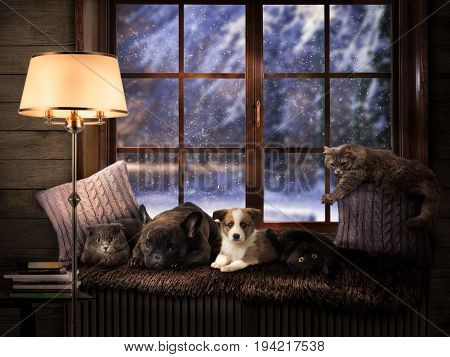 Many Pets on a cozy windowsill. Outside the winter snow. Dog and cat lie together. Shining lamp evening