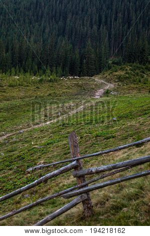 Summer landscape in the Ukrainian Carpathian Mountains with flock of sheep. Wooden fence in the foreground.