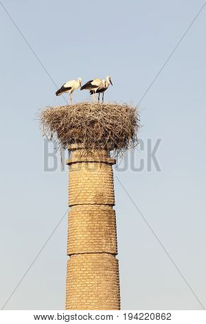 Nest with storks on top of an abandoned factory chimney in Huelva Andalusia Spain