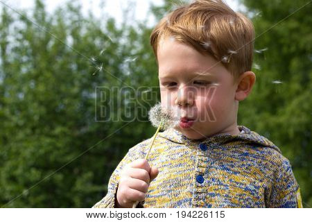Little redhead boy blows in the field of dandelions