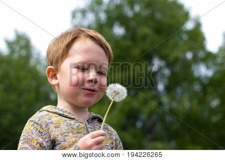 Little redhead boy in the field of dandelions