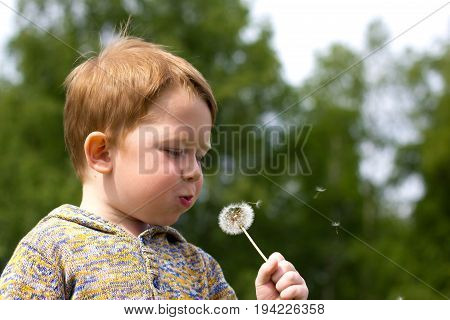 Little redhead boy in the field of dandelions