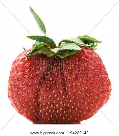 Big fresh organic heirloom home grown strawberry isolated on white