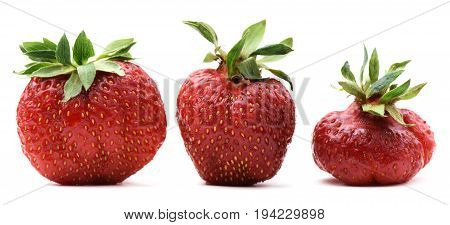 Ugly organic home grown strawberries isolated closeup
