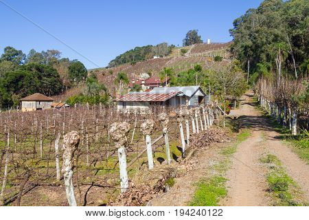 Vineyards And Farms In Winter, Vale Dos Vinhedos Valley