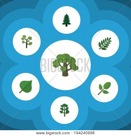 Flat Icon Nature Set Of Acacia Leaf, Tree, Foliage And Other Vector Objects. Also Includes Evergreen, Oak, Wood Elements.