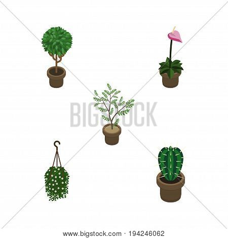 Isometric Flower Set Of Peyote, Fern, Grower And Other Vector Objects. Also Includes Peyote, Hanging, Houseplant Elements.