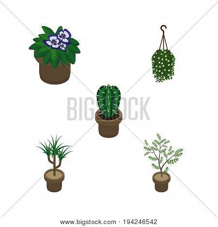 Isometric Plant Set Of Fern, Houseplant, Peyote And Other Vector Objects. Also Includes Blossom, Peyote, Botany Elements.