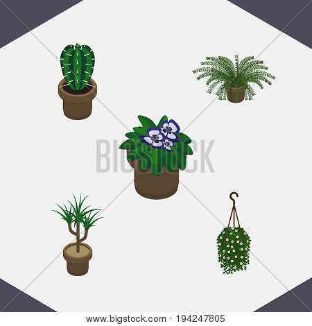 Isometric Flower Set Of Blossom, Plant, Flowerpot And Other Vector Objects. Also Includes Hanging, Botany, Pot Elements.