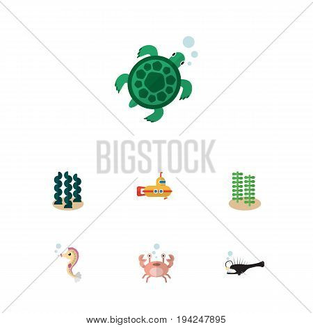 Flat Icon Nature Set Of Alga, Periscope, Hippocampus And Other Vector Objects. Also Includes Alga, Horse, Underwater Elements.