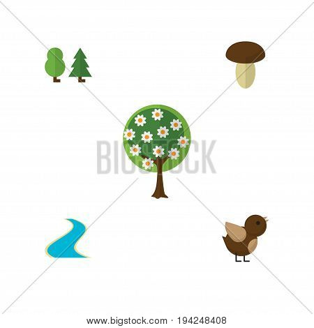 Flat Icon Ecology Set Of Forest, Tree, Tributary And Other Vector Objects. Also Includes River, Forest, Estuary Elements.